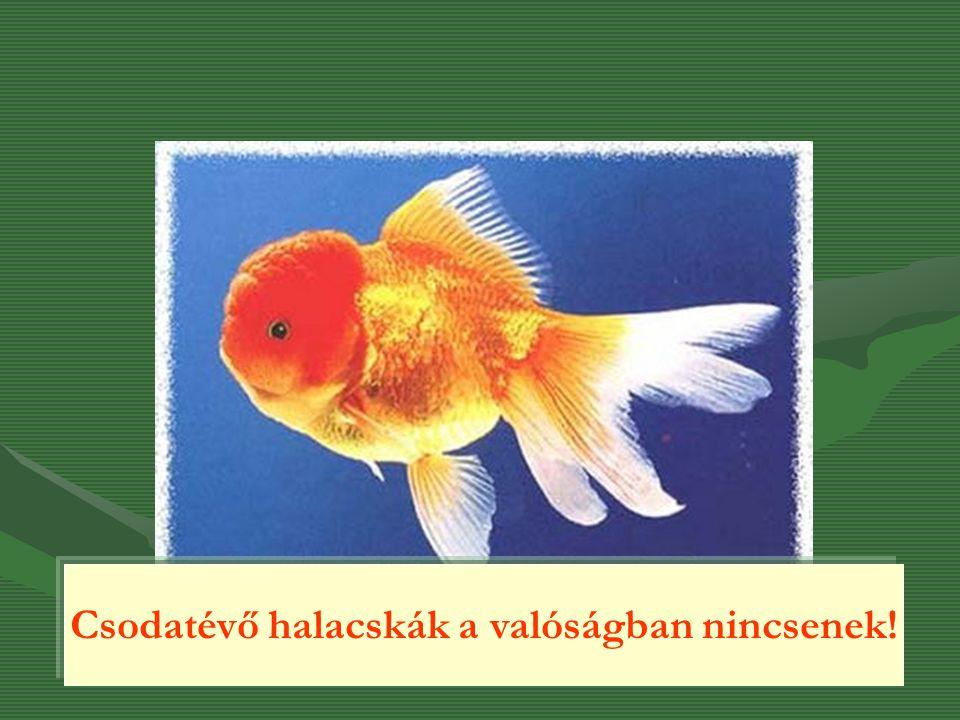 Csodatévő halacskák a valóságban nincsenek!