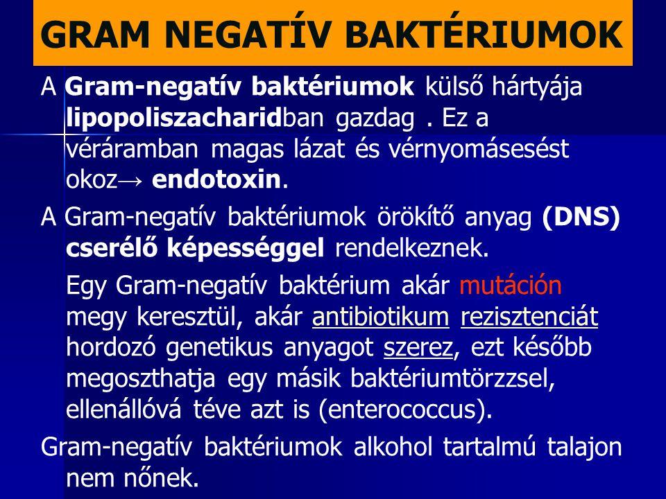 GRAM NEGATÍV BAKTÉRIUMOK