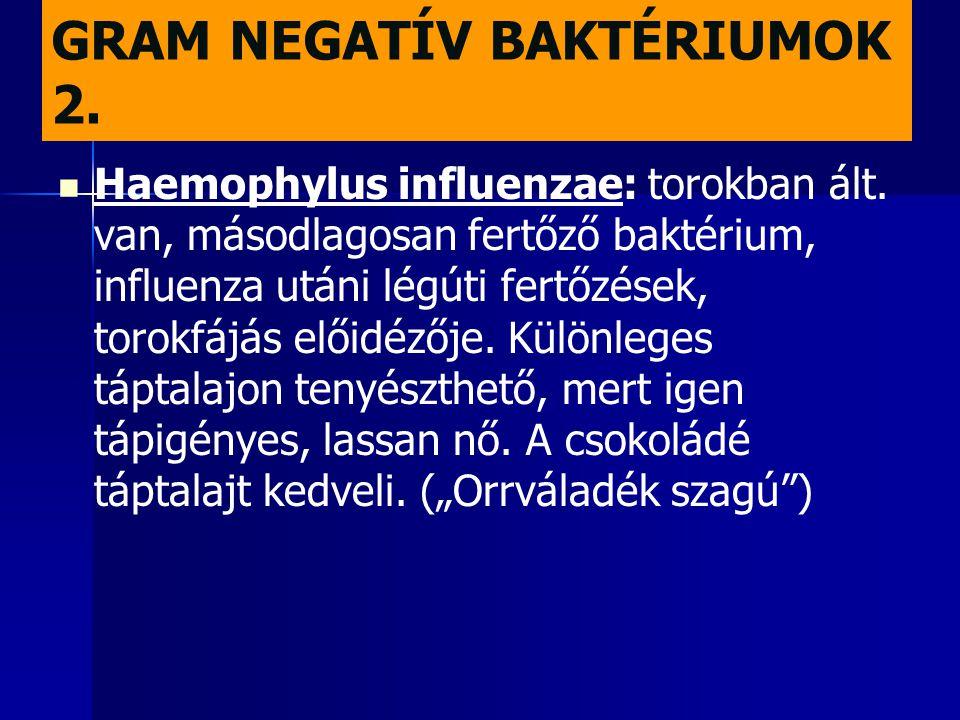 GRAM NEGATÍV BAKTÉRIUMOK 2.