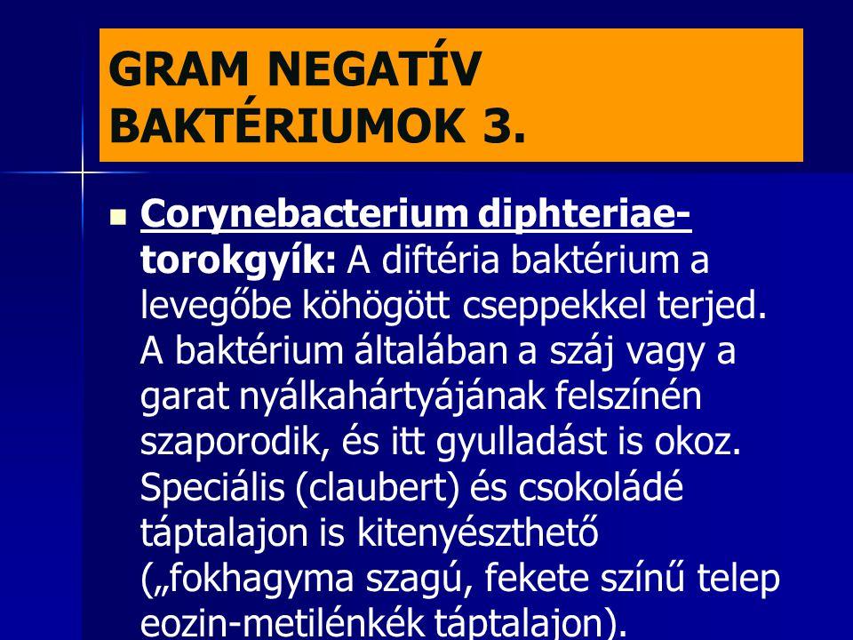 GRAM NEGATÍV BAKTÉRIUMOK 3.