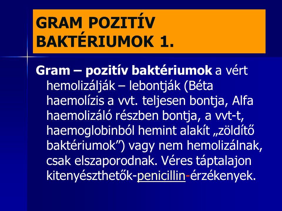 GRAM POZITÍV BAKTÉRIUMOK 1.