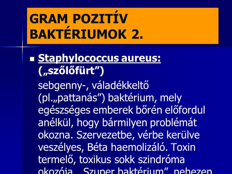 GRAM POZITÍV BAKTÉRIUMOK 2.