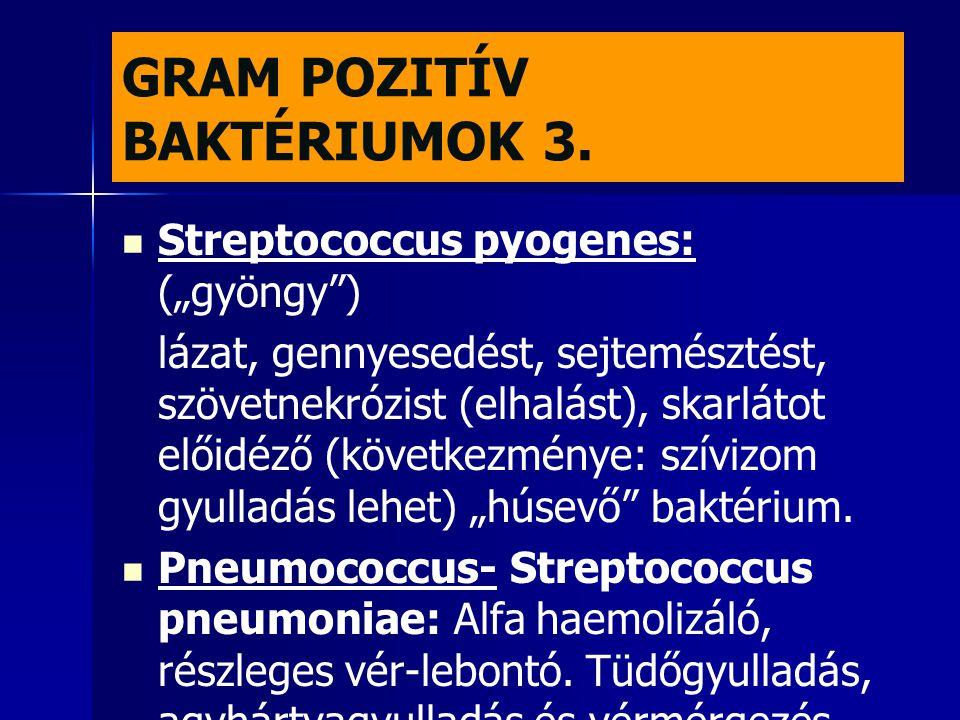 GRAM POZITÍV BAKTÉRIUMOK 3.