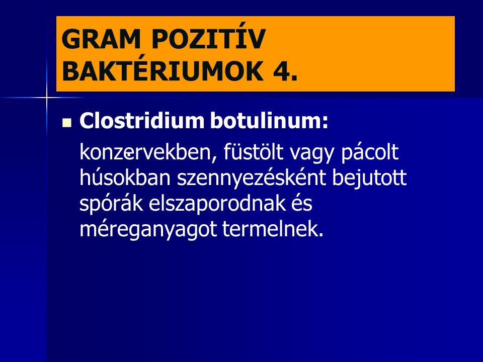 GRAM POZITÍV BAKTÉRIUMOK 4.