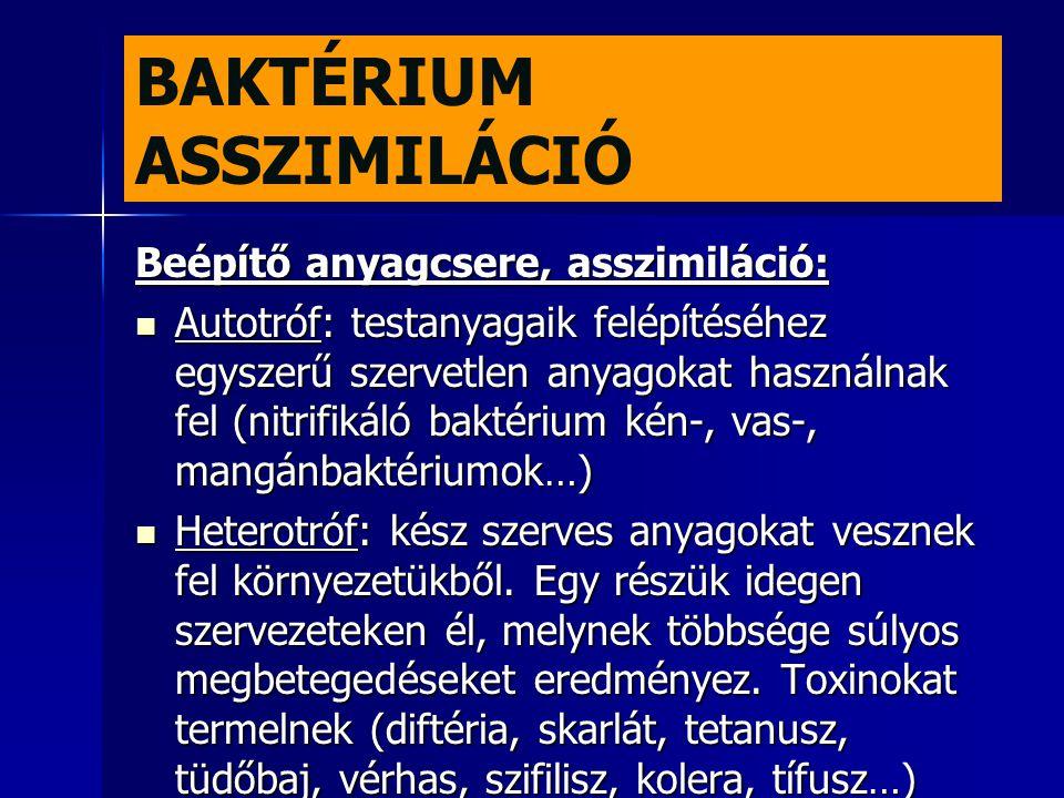 BAKTÉRIUM ASSZIMILÁCIÓ