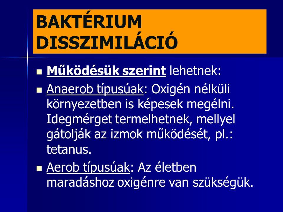 BAKTÉRIUM DISSZIMILÁCIÓ