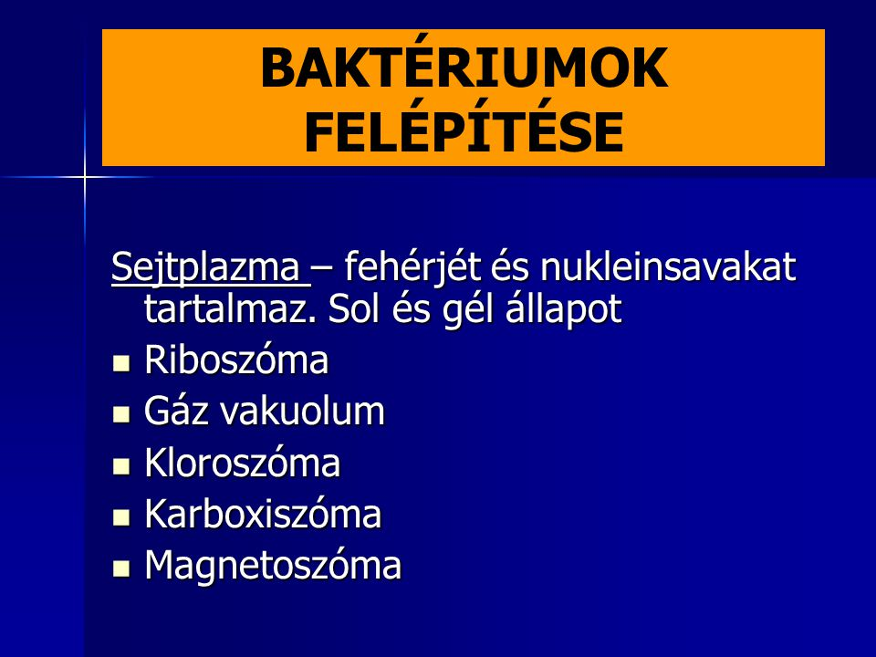 BAKTÉRIUMOK FELÉPÍTÉSE