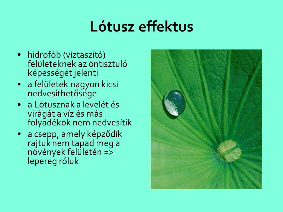 Lótusz effektus hidrofób (víztaszító) felületeknek az öntisztuló képességét jelenti. a felületek nagyon kicsi nedvesíthetősége.