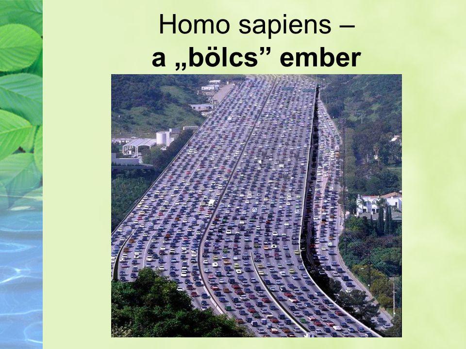 """Homo sapiens – a """"bölcs ember"""