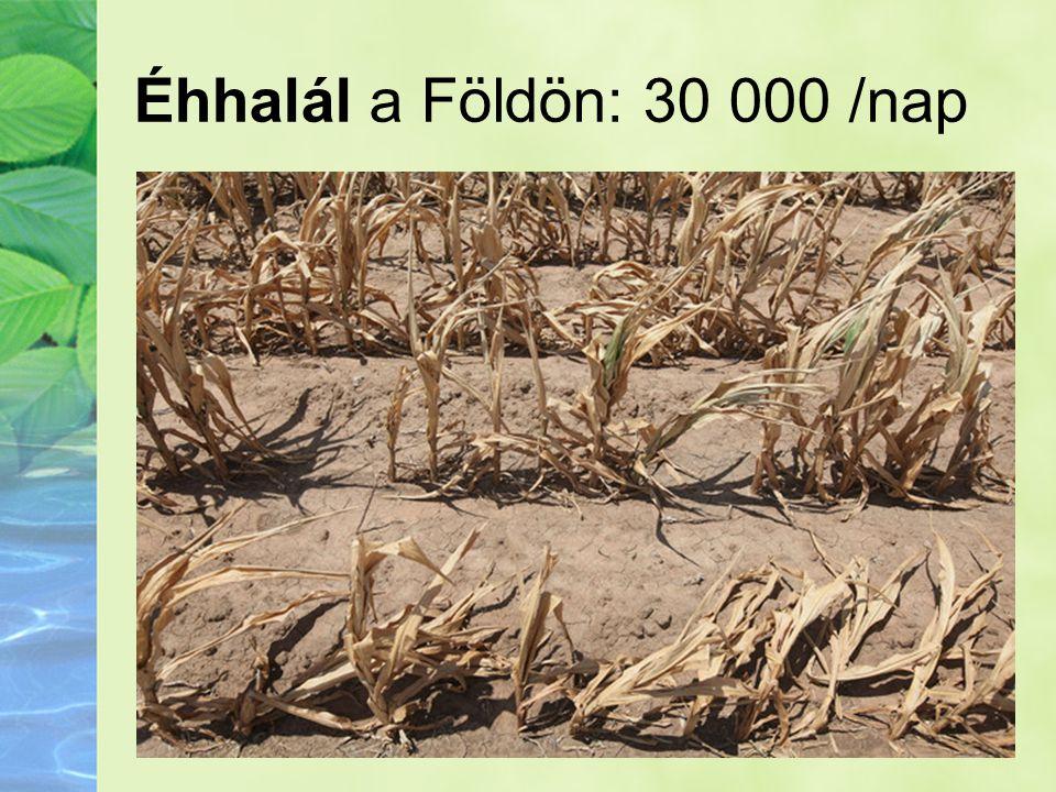 Éhhalál a Földön: 30 000 /nap