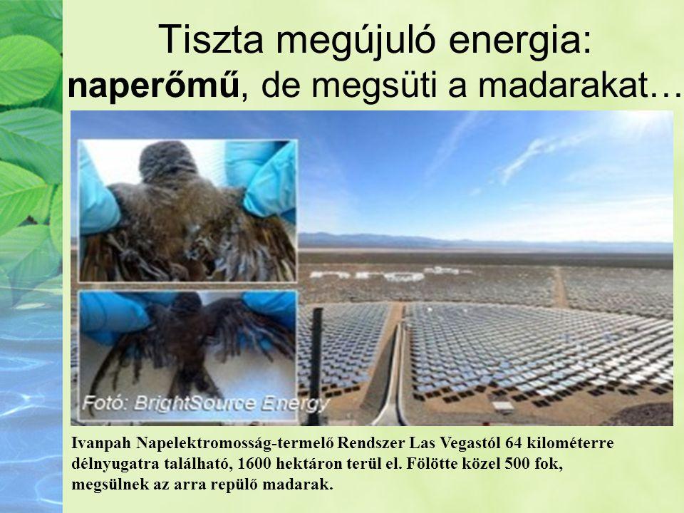 Tiszta megújuló energia: naperőmű, de megsüti a madarakat…