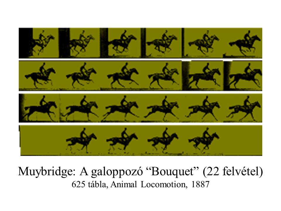 Muybridge: A galoppozó Bouquet (22 felvétel)