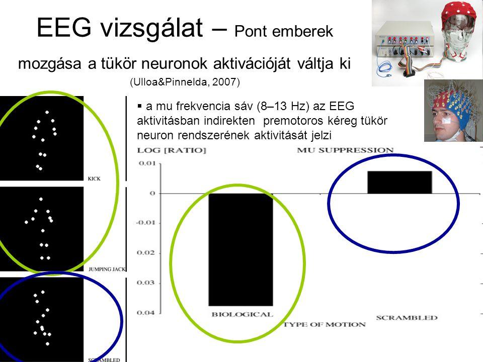 EEG vizsgálat – Pont emberek mozgása a tükör neuronok aktivációját váltja ki (Ulloa&Pinnelda, 2007)