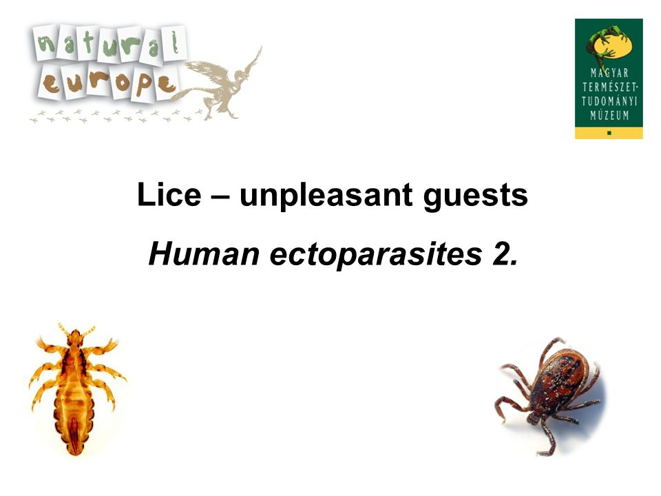 Lice – unpleasant guests
