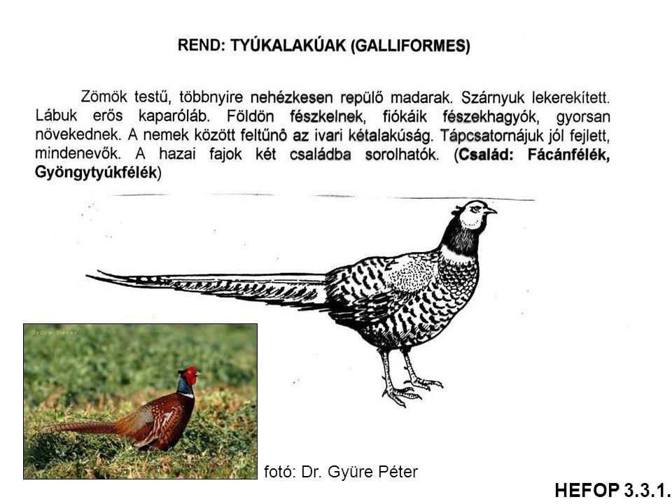 fotó: Dr. Gyüre Péter HEFOP 3.3.1.