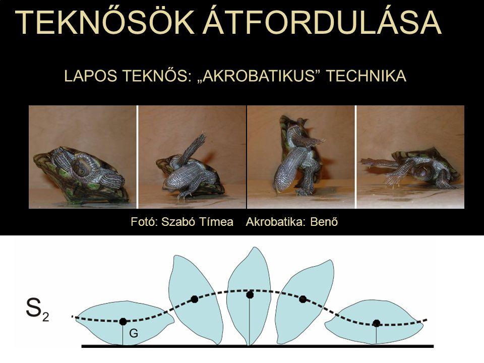 Fotó: Szabó Tímea Akrobatika: Benő