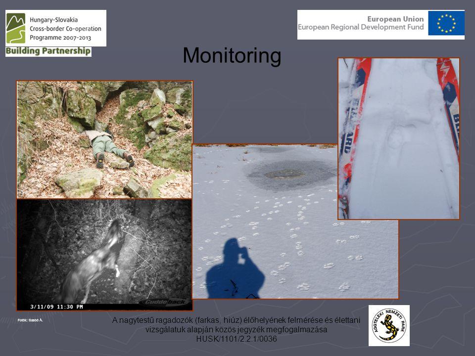Monitoring Fotók: Szabó Á. A nagytestű ragadozók (farkas, hiúz) élőhelyének felmérése és élettani vizsgálatuk alapján közös jegyzék megfogalmazása.
