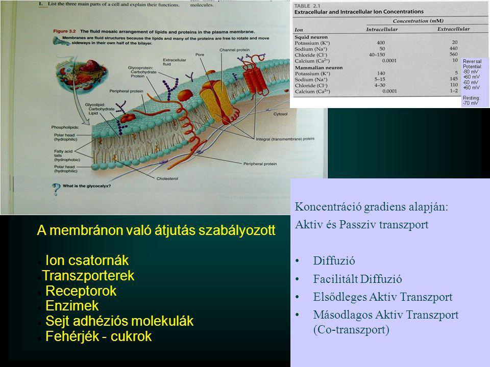 A membránon való átjutás szabályozott Ion csatornák Transzporterek