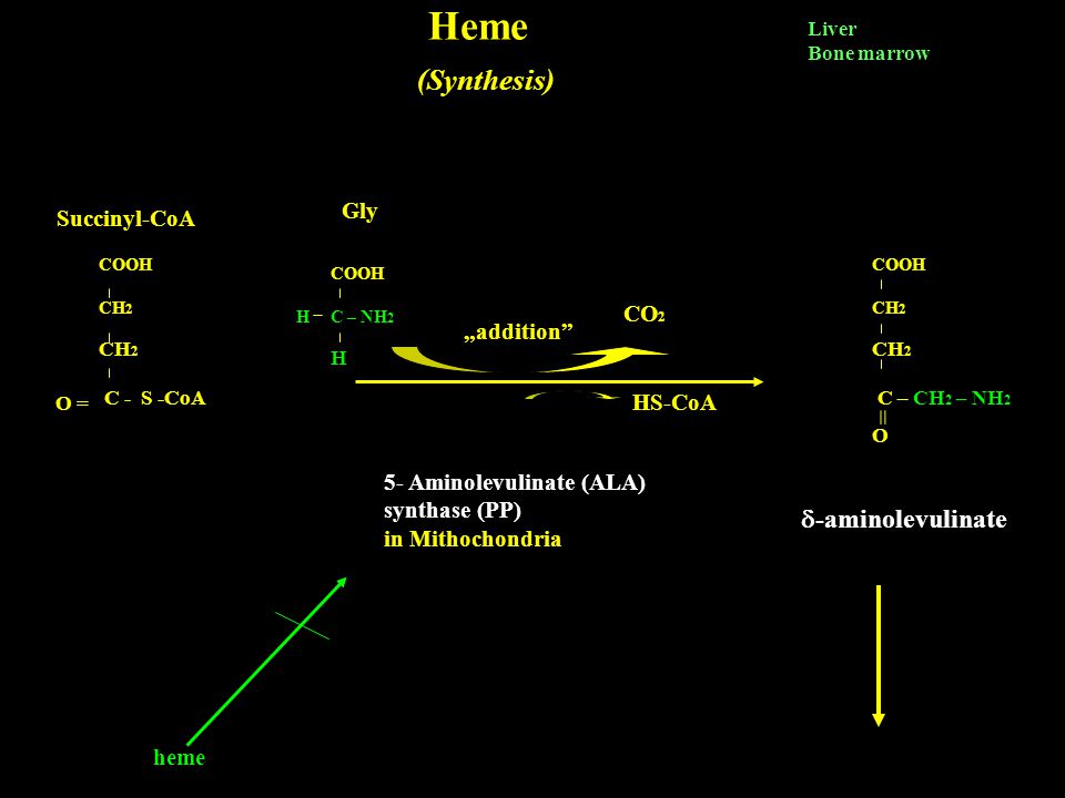 "Heme (Synthesis) = -aminolevulinate Gly Succinyl-CoA CO2 ""addition"