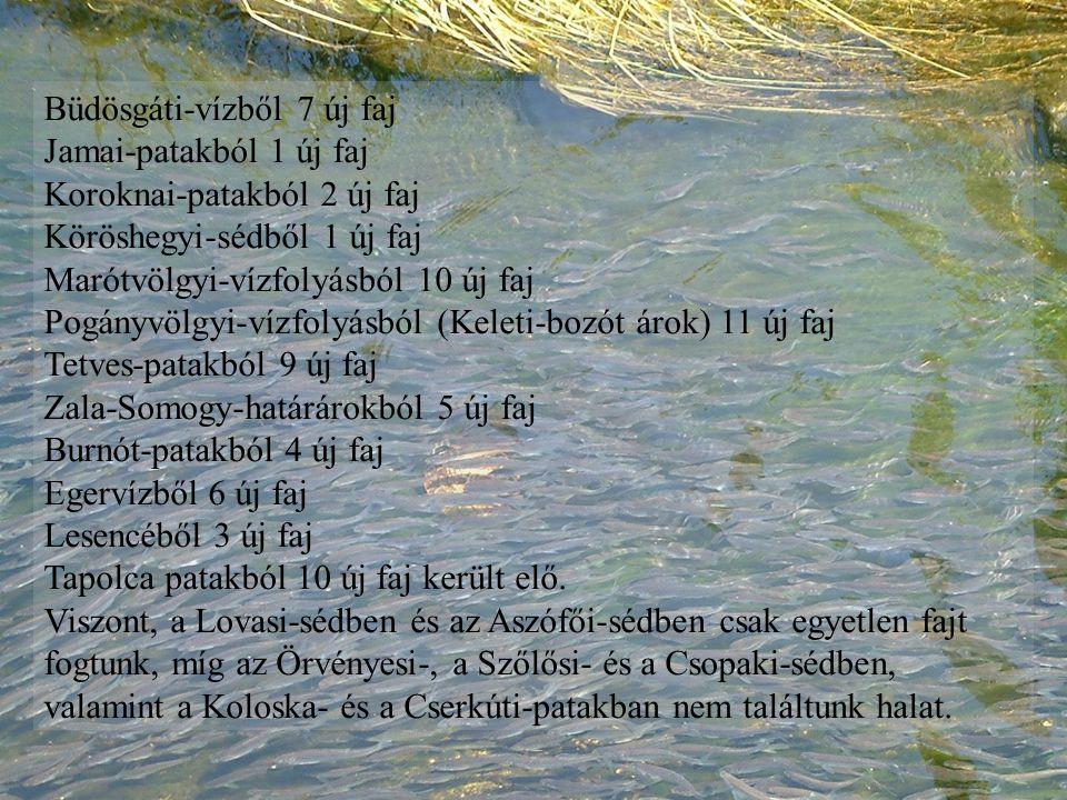 Büdösgáti-vízből 7 új faj