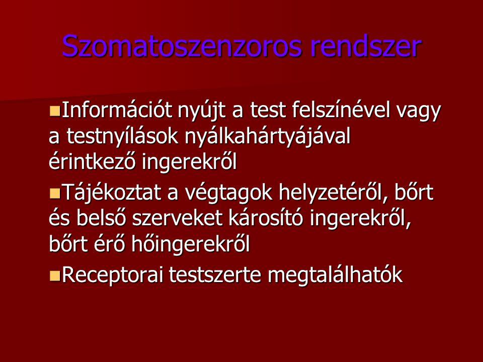 Szomatoszenzoros rendszer