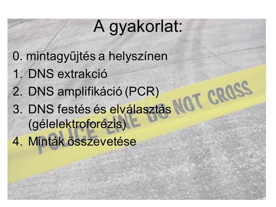 A gyakorlat: 0. mintagyűjtés a helyszínen DNS extrakció