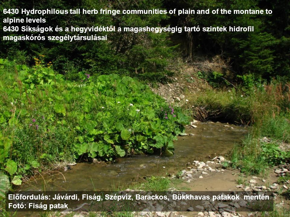 6430 Hydrophilous tall herb fringe communities of plain and of the montane to alpine levels