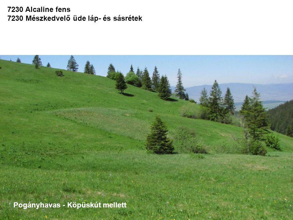 7230 Alcaline fens 7230 Mészkedvelő üde láp- és sásrétek Pogányhavas - Köpüskút mellett