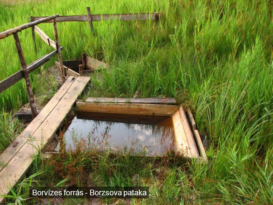 Borvízes forrás - Borzsova pataka