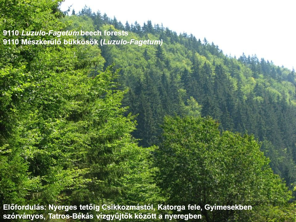 9110 Luzulo-Fagetum beech forests