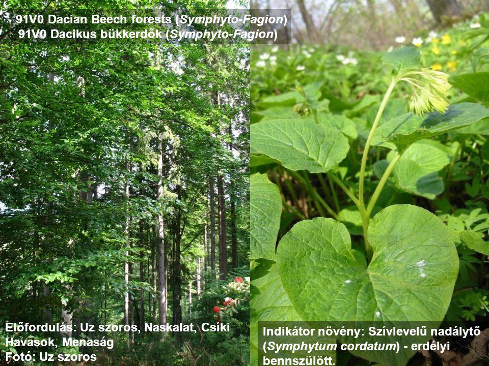 91V0 Dacian Beech forests (Symphyto-Fagion)