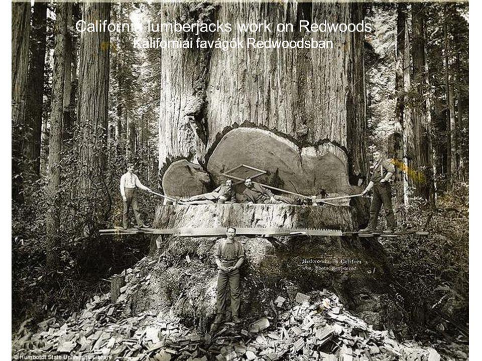 Kaliforniai favágók Redwoodsban