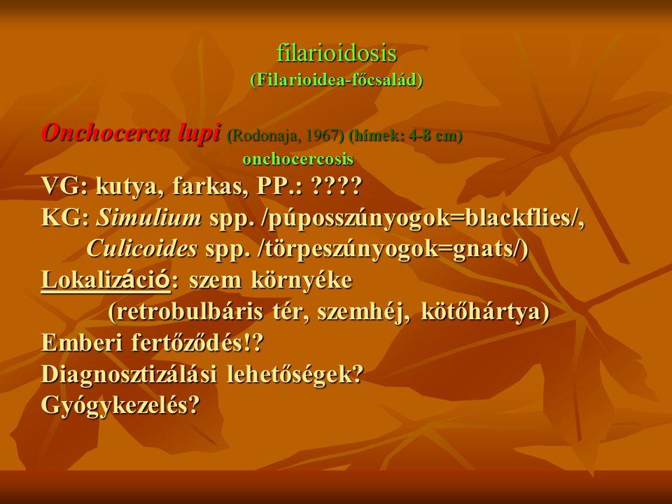 filarioidosis (Filarioidea-főcsalád)