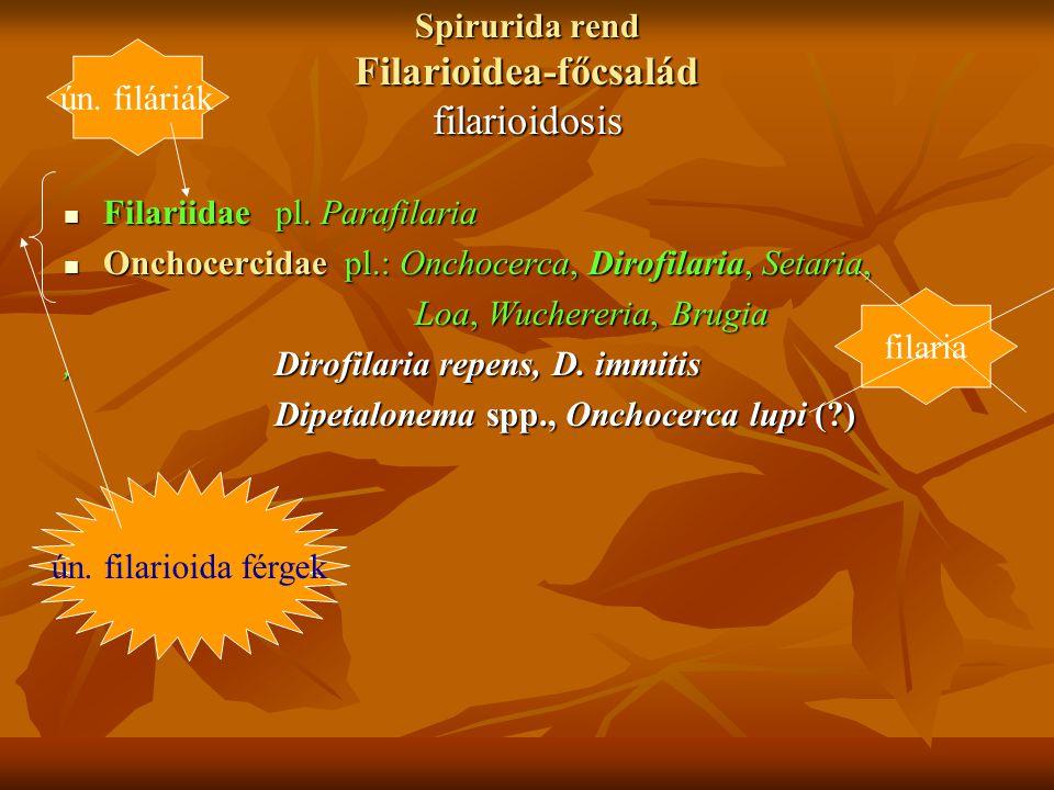 Spirurida rend Filarioidea-főcsalád filarioidosis