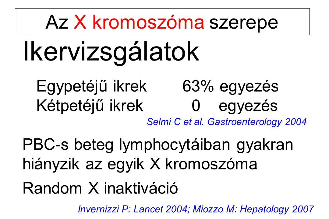 Az X kromoszóma szerepe