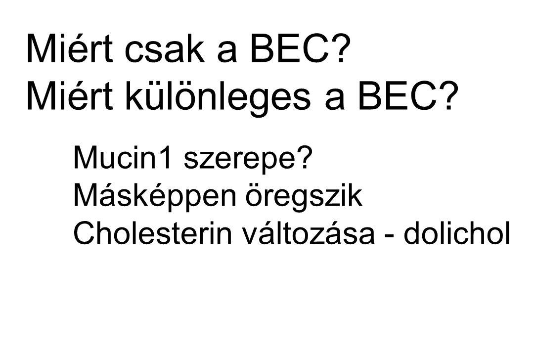 Miért csak a BEC Miért különleges a BEC Másképpen öregszik
