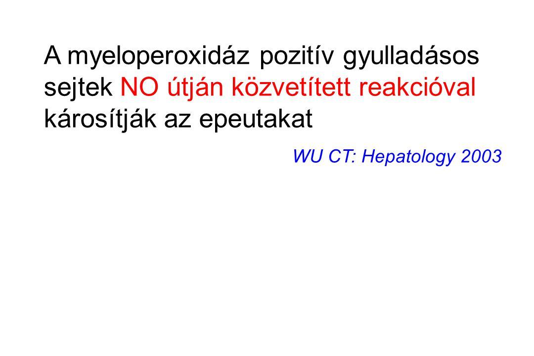 A myeloperoxidáz pozitív gyulladásos sejtek NO útján közvetített reakcióval károsítják az epeutakat
