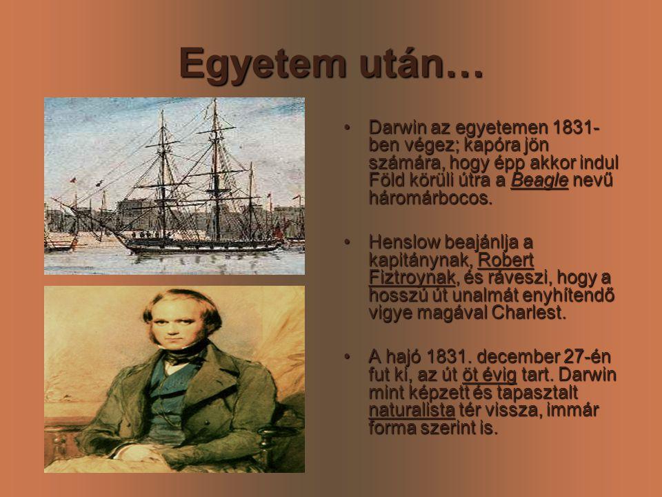 Egyetem után… Darwin az egyetemen 1831-ben végez; kapóra jön számára, hogy épp akkor indul Föld körüli útra a Beagle nevű háromárbocos.