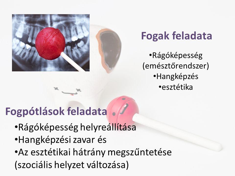 Rágóképesség (emésztőrendszer) Hangképzés esztétika