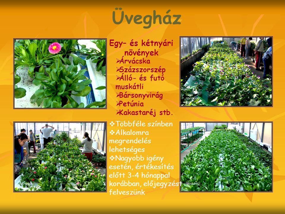 Üvegház Egy– és kétnyári növények Árvácska Százszorszép