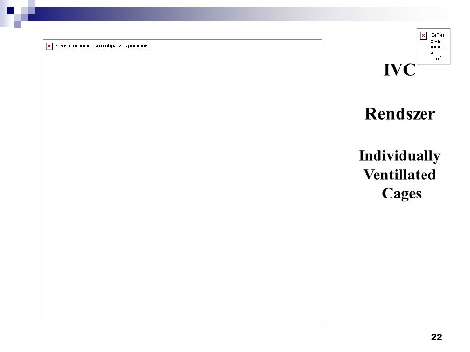 IVC Rendszer Individually Ventillated Cages