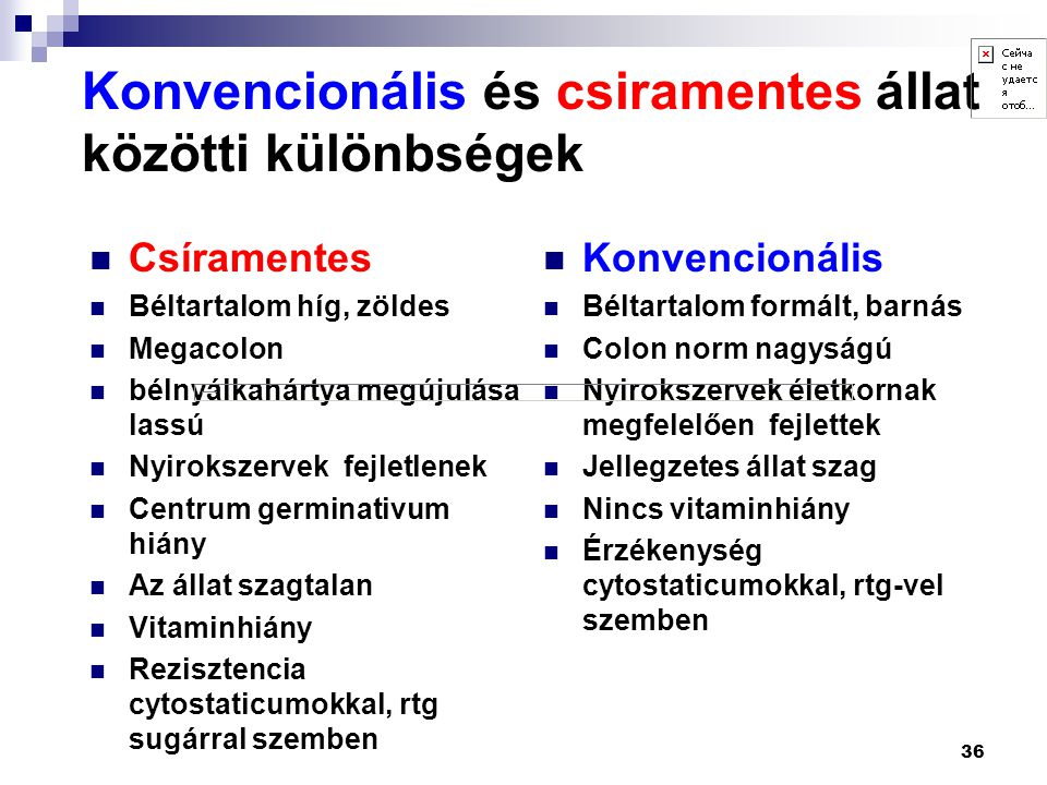 Konvencionális és csiramentes állat közötti különbségek