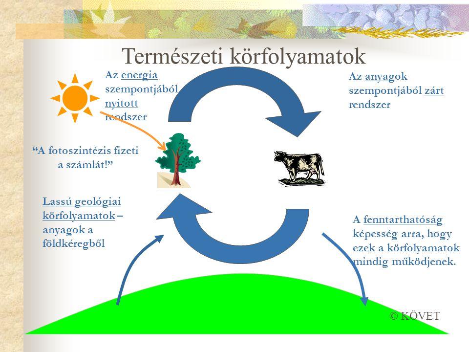 A fotoszintézis fizeti a számlát!