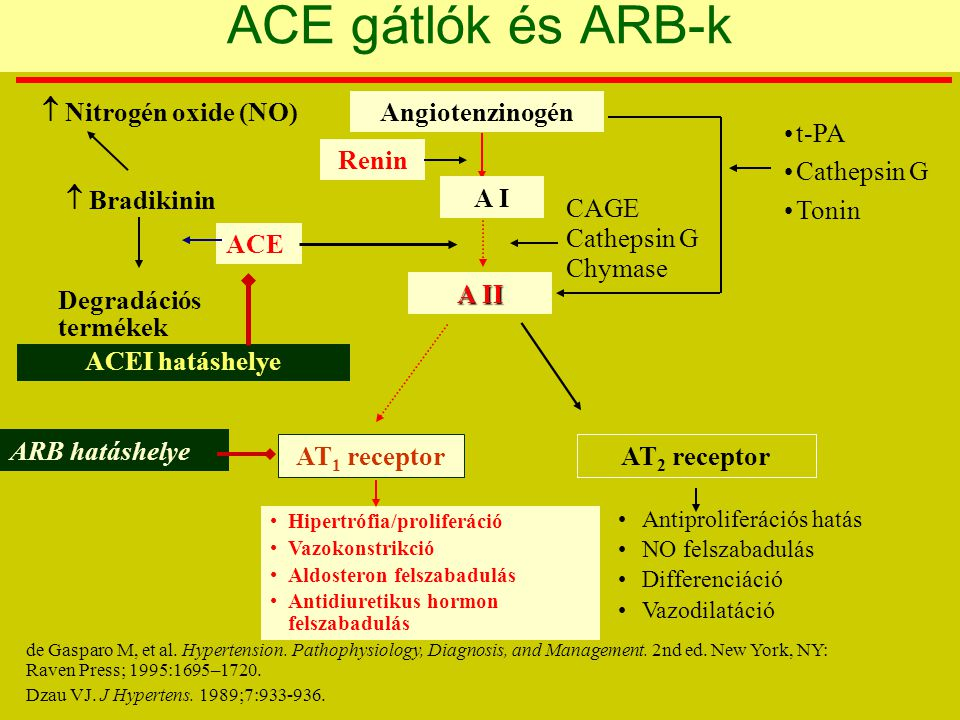ACE gátlók és ARB-k  Nitrogén oxide (NO) Angiotenzinogén t-PA