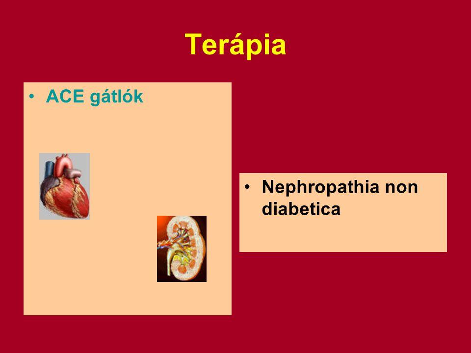 Terápia ACE gátlók Nephropathia non diabetica