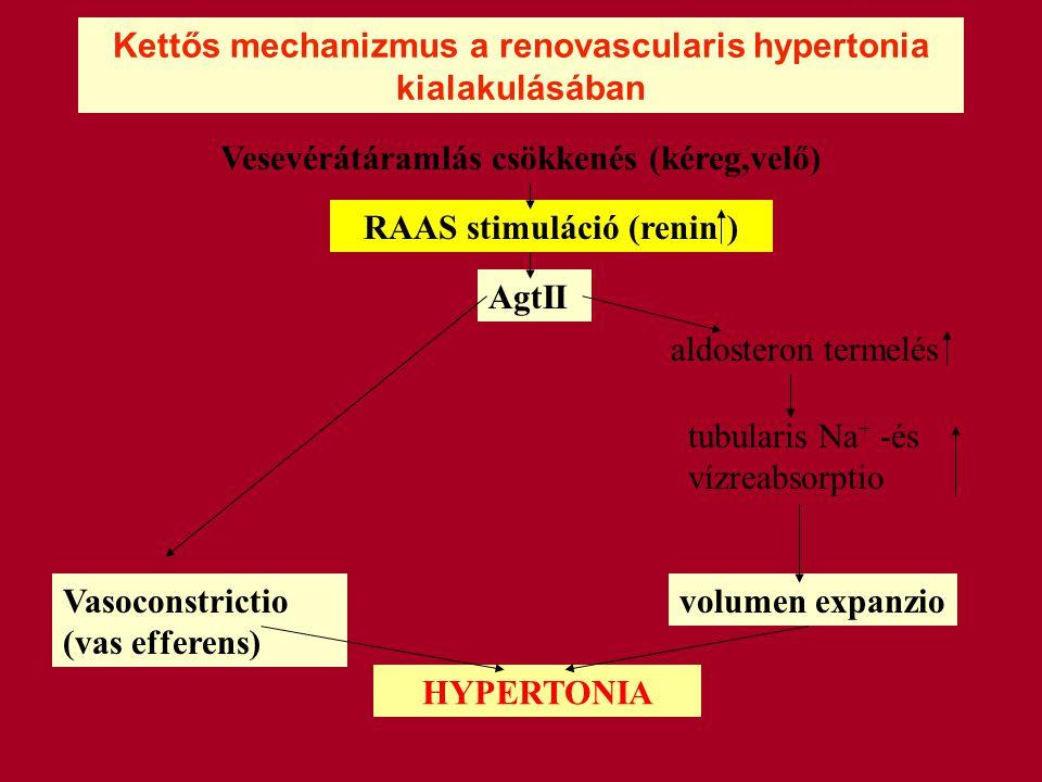 Kettős mechanizmus a renovascularis hypertonia kialakulásában