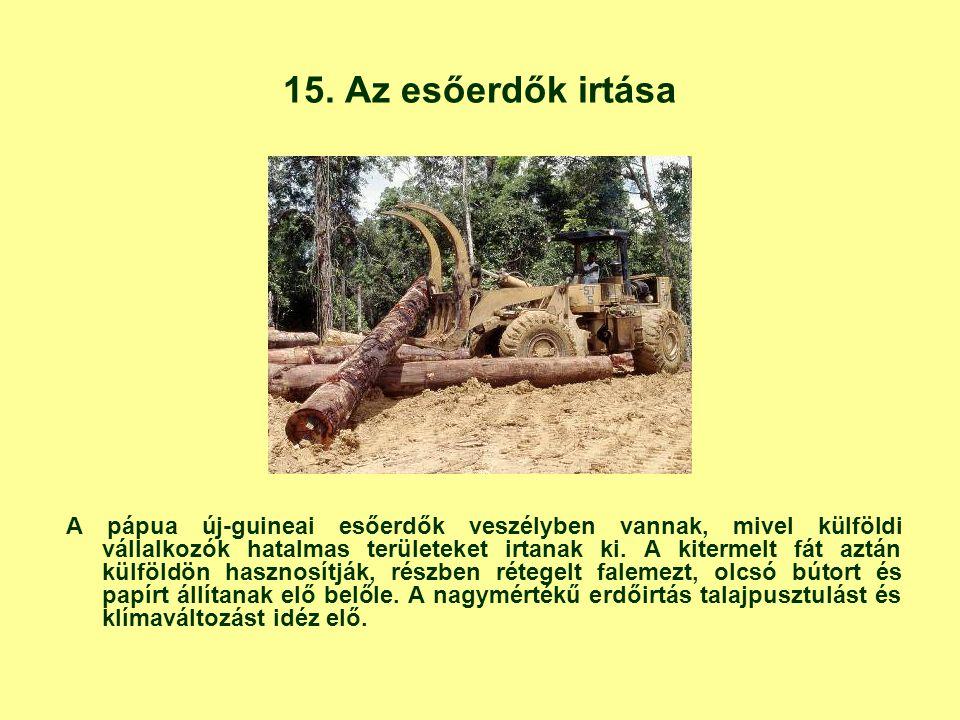 15. Az esőerdők irtása