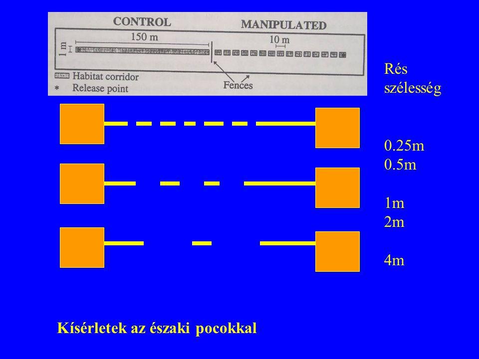 Rés szélesség 0.25m 0.5m 1m 2m 4m Kísérletek az északi pocokkal
