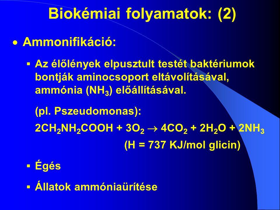 Biokémiai folyamatok: (2)