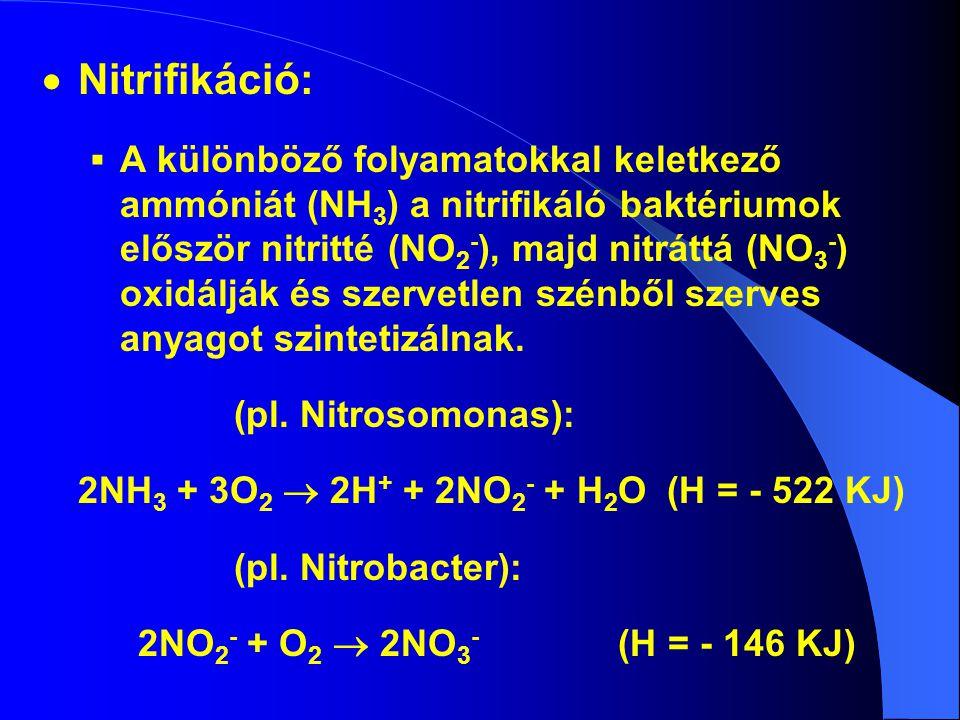 Nitrifikáció: